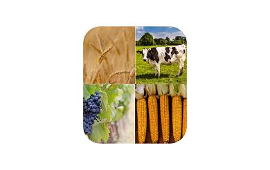 Réforme fiscalité agricole et viticole.png